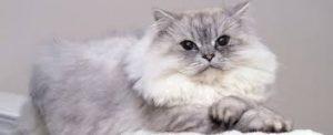 cat coat 1