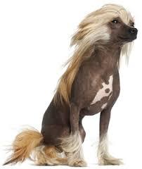 dog coat 2