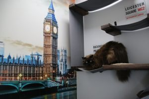 Image of a cat in his new london suite