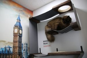 Image of a cat in his royal suite - london suite